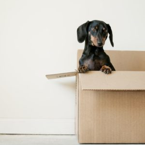 Dog in Moving Box | 3GuysMoving.com