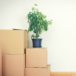Houseplant on top of Moving Boxes | 3GuysMoving.com