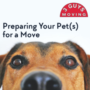 Preparing Your Pet(s) for a Move